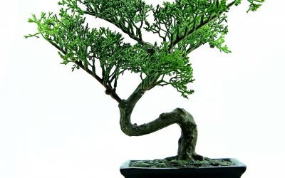 De bonsai tuin