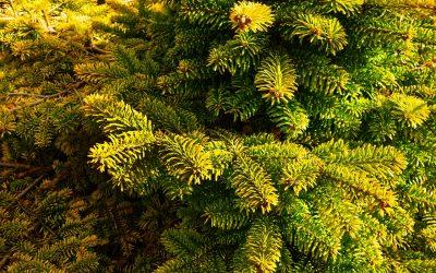 De Coniferen tuin