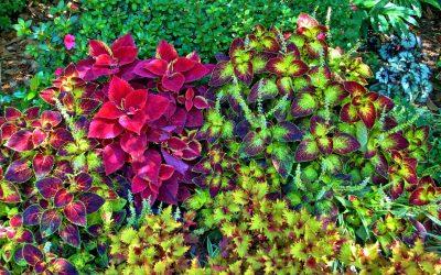 Doe hier tuin ideeën op om de soort tuin te bepalen